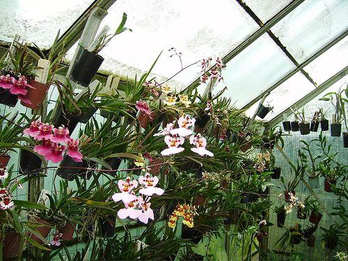 3 Panduan Lengkap Cara Menanam Anggrek Bunga Mahal - http://www.ruangtani.com/3-panduan-lengkap-cara-menanam-anggrek-bunga-mahal/