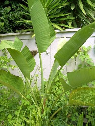 17 best ideas about pool plants on pinterest pool for Plants for pool area