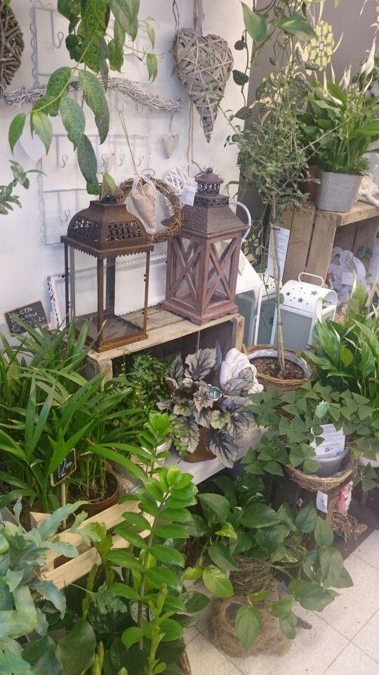 Summer plants in Flower shop Ikivihreä