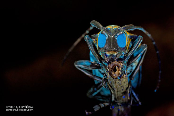 Macro Photographs of Singapore's Most Unusual Insects and Arachnids by Nicky Bay