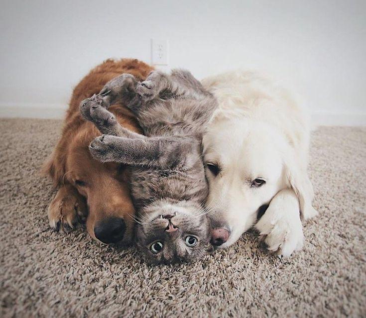 Os cães Watson e Kiko são os melhores amigos do gato Harry – amizade …   – Oh wie süssssss
