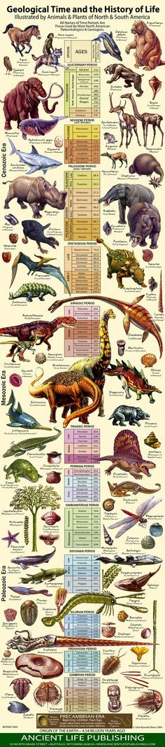 Geological time and the history of life chart.
