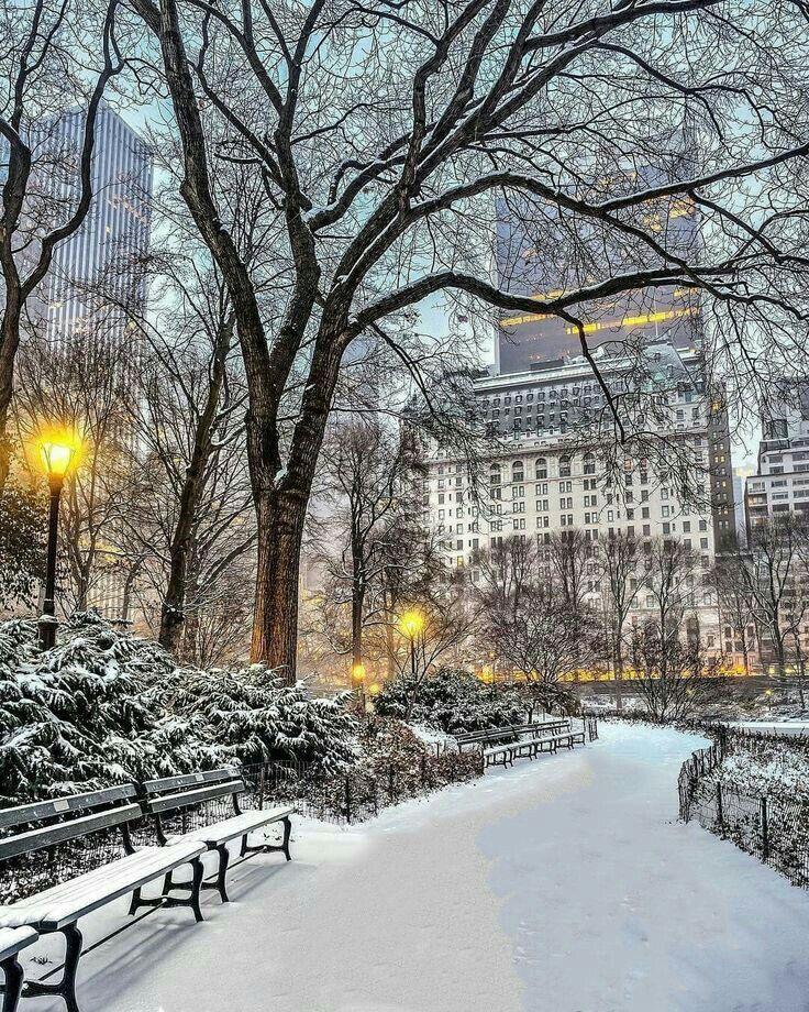 Картинки по запросу central park new york winter