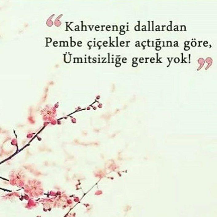 Kahverengi dallardan pembe çiçekler açtığına göre, ümitsizliğe gerek yok ! #Yalnız #Adam #Aşk #Sözleri