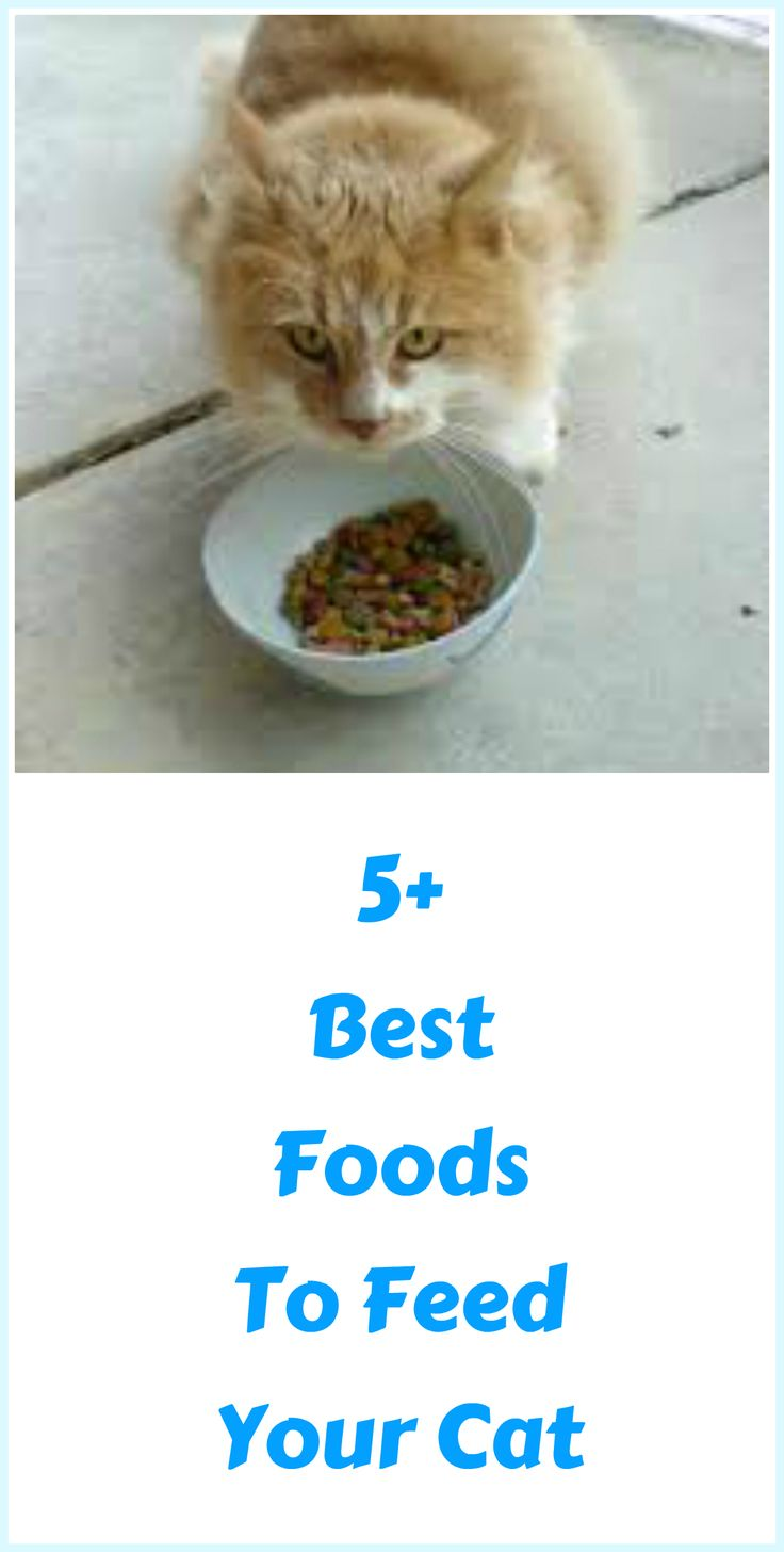 Top 5+  Cat Foods: Best Cat Foods Reviewed ... see more at PetsLady.com ... The FUN site for Animal Lovers