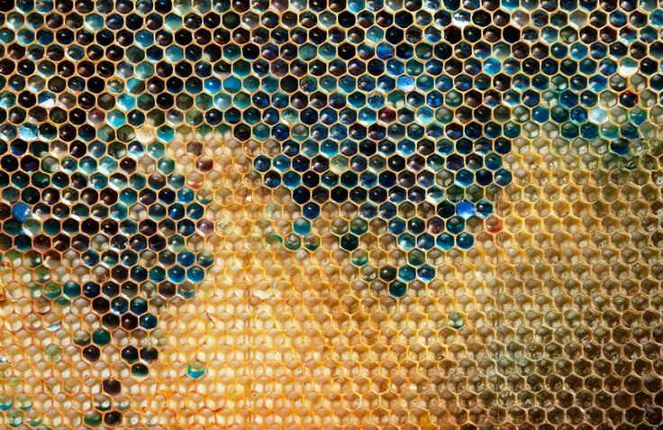 Misterul Mierii Multicolore - Mare le-a fost mirarea unor apicultori din Franta, cand au gasit in stup faguri cu miere multicolora.