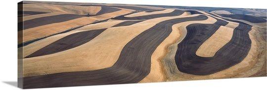 Wheat Fields and Contour Farming, S.E. Washington