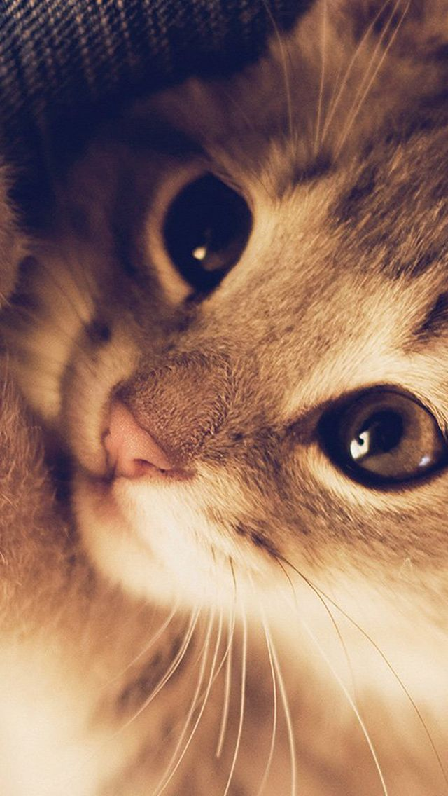 Cute Cat Kitten Nature Animal Warm Macro iPhone 5s