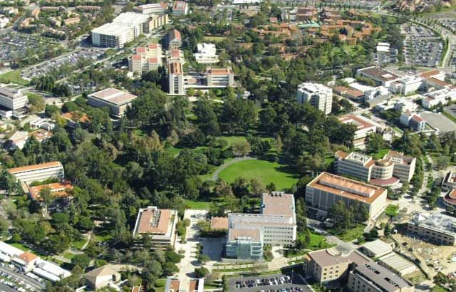 University of California, Irvine: Junior/Senior year -- B.A., Honors Psychology