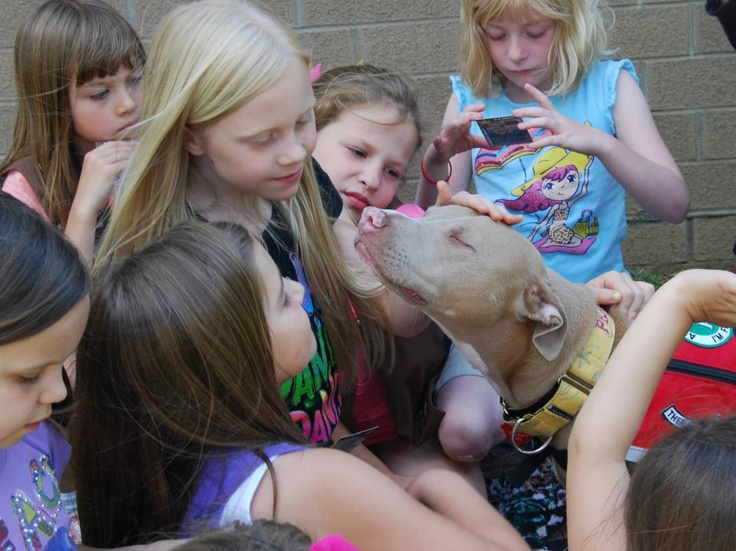 Oh My Dog - Death by kisses!!! Therapy Dog teaching school kids the real pitbull nature
