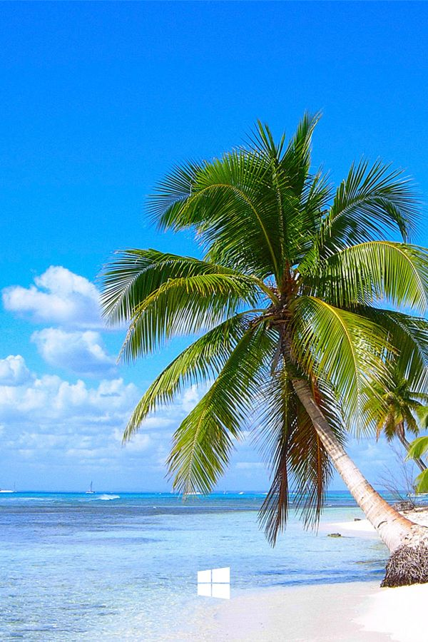 Bring the lime green grass, palm trees, and Barbados beaches to your desktop with the Windows Caribbean Shores theme. #Summer #Sunshine #VacationIdeas