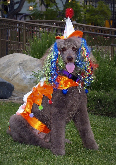Clowning Around    Coco in her Halloween costume