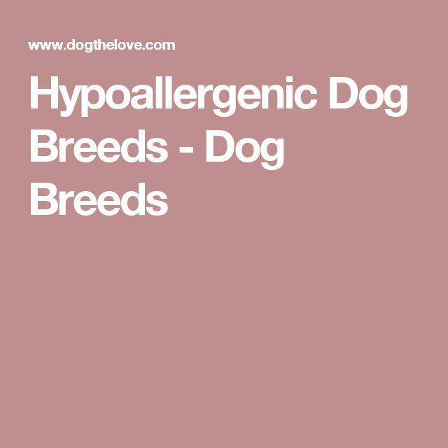 Hypoallergenic Dog Breeds - Dog Breeds