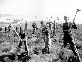 Jovens da Mocidade Portuguesa plantando as arvores de Monsanto, sem data