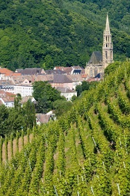 Vineyard, Alsace, France......this would be a great place to celebrate my 50th!