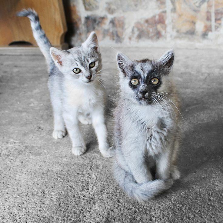 Two years ago / Murmur and little Iris  #throwback #sunday #murmur #little #iris #kittie #kitten