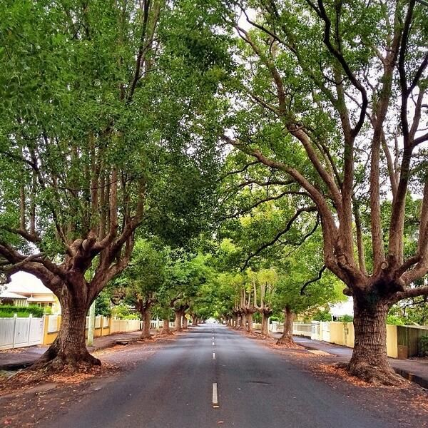 Beautiful tree lined street in the town of Toowoomba, Australia. I'm told it's up a mountain range...I love this, could live here.