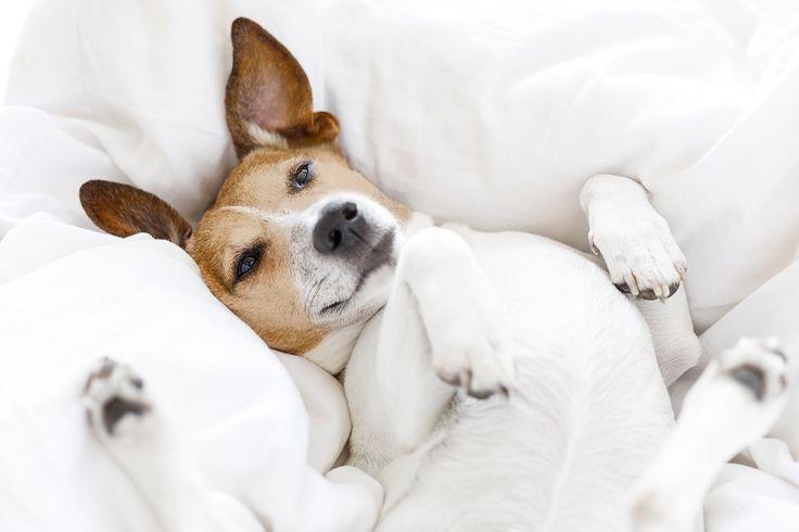 Solange mein Hundebett nicht fertig ist schlaf ich halt hier :P schönes Wochenende Euch Allen :D  #fashion #style #stylish #shopping #luxury #lifestyle #duxiana #bett #dux #bed #beautiful #instagood #fun #love #amazing #smile #look #instalike #igers #picoftheday #dogbed #dogstyle #dogpic