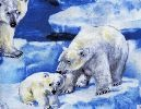 Wandering  Polar Bears noveltyJ O' Fabrics, Fabrics Online, Animal Fabrics, Fabrics Stores