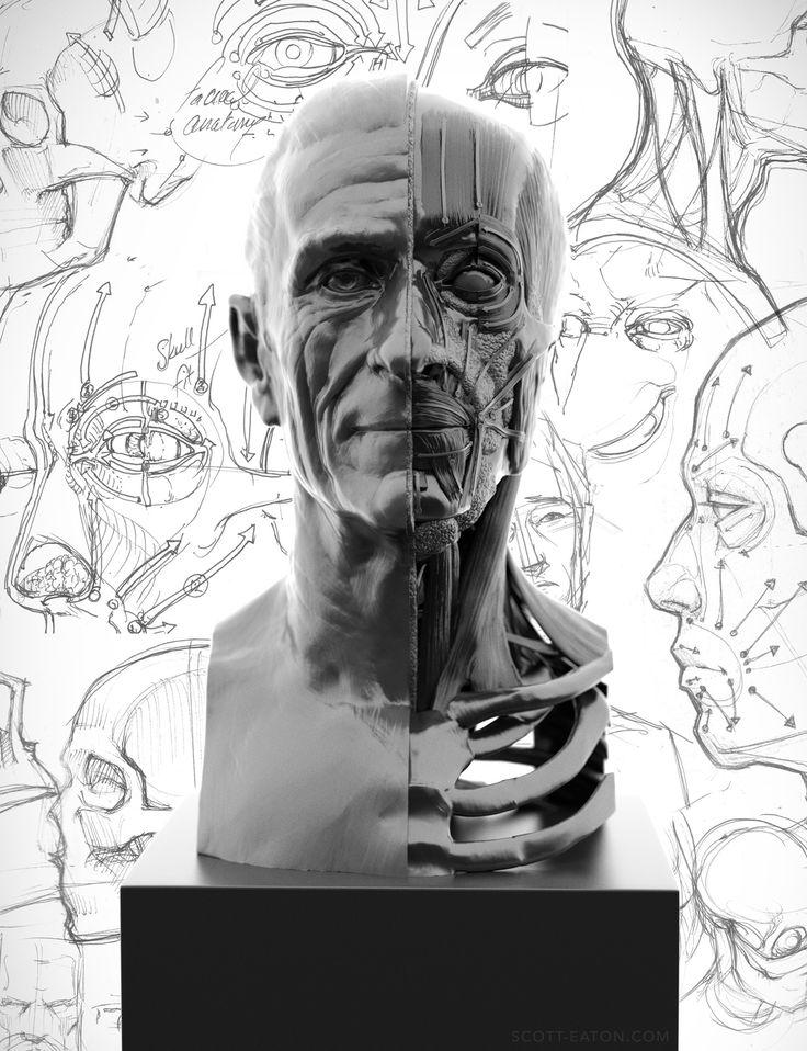 Portrait and Facial Anatomy Study » Scott Eaton Studios