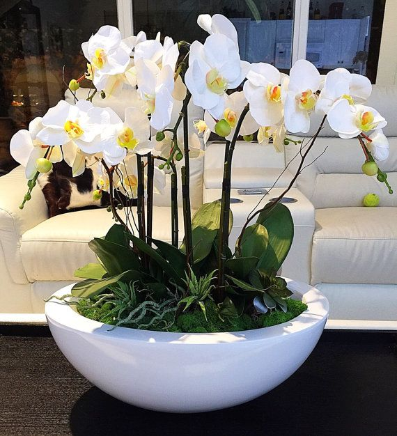 Large White Orchid Arrangement, Realistic Orchids Set In White Vase, Green Moss and Succulent Accents, White Orchids, Orchid Silk Floral Arr