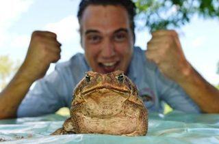 Cane Toad racing hits Kununurra