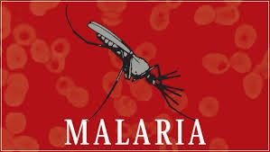 Malaria is an infection carried by infected mosquitoes.