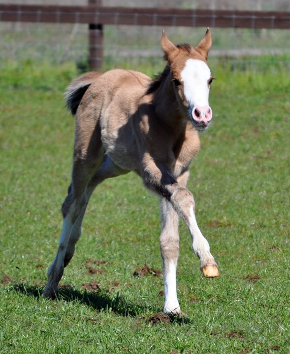238 Best Images About Horse Color Galore: Foal Coats On