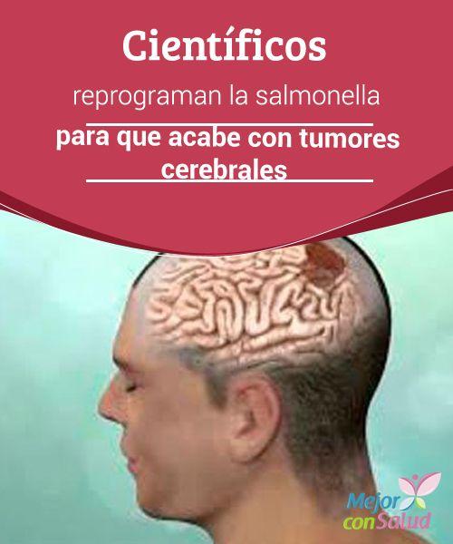 """""""Científicos reprograman la #Salmonella para que acabe con tumores #Cerebrales   ¿La #Bacteria de la Salmonella, una herramienta para vencer el cáncer? Suena extraño. Siempre que escuchamos hablar de ella, se trata de noticias relacionadas con epidemias infecciosas que pueden causar la muerte.  #Curiosidades"""