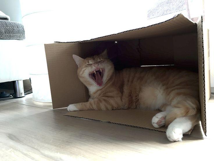 Zahnstein bei Katzen: Was kannst Du tun? Wir zeigen Dir, wie Du Deine Katze vor Zahnstein schützen kannst und was im schlimmsten Fall passieren kann.