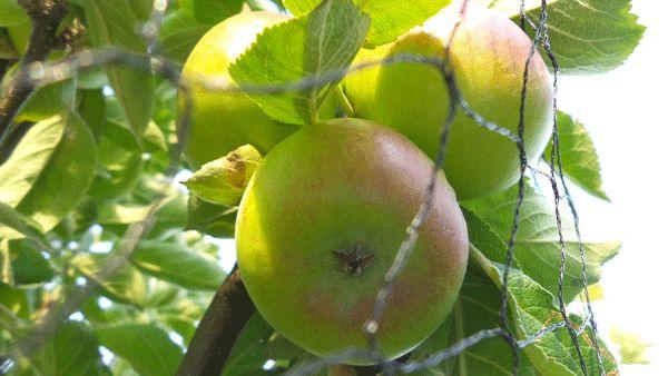 Michel's fruittuin