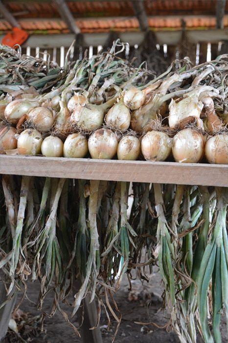 Veja Fotos de como é a produção orgânica de Morango, Beterraba, Tomate, Frango…