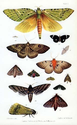 Te Ara – The Encyclopedia of New Zealand Reference: Richard Taylor, Te Ika a Maui, or, New Zealand and its inhabitants. Facsim. ed. Wellington: Reed, 1974, plate 1