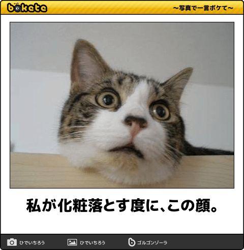 """「昨日捨てた猫がこんなLINE送ってきた…」じわじわくる""""猫のボケて画像""""12選"""