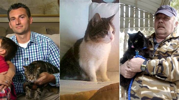 Good kitty: These 6 'hero cats' saved the humans they loved - Pets - TODAY.com