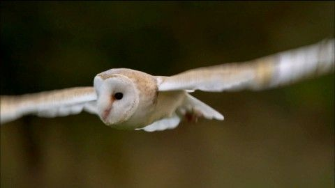 Owl Power ~ About | Nature | PBS