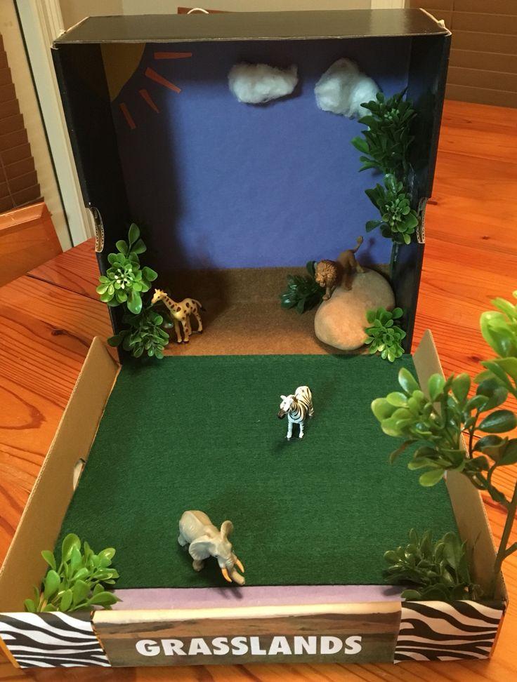 Grasslands Ecosystem Diorama/Model 3rd Grade Project