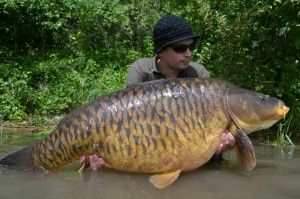 17 best images about world carp record on pinterest for Carpe koi belgique