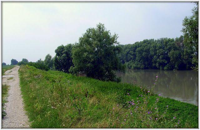 Sulle rive dell'Adige n Veneto