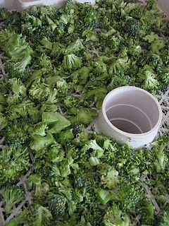 Food Storage - Dehydrating Broccoli