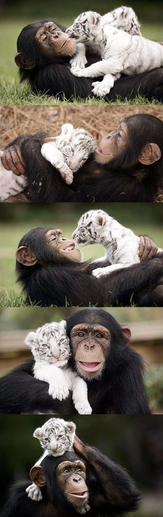 Best Animals Images On Pinterest Pictures Amazing Eyes And - 30 cutest pictures ever babies posing animals