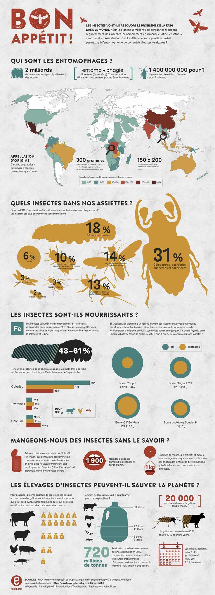 Les insectes peuvent-ils résoudre le problème de la faim dans le monde ?