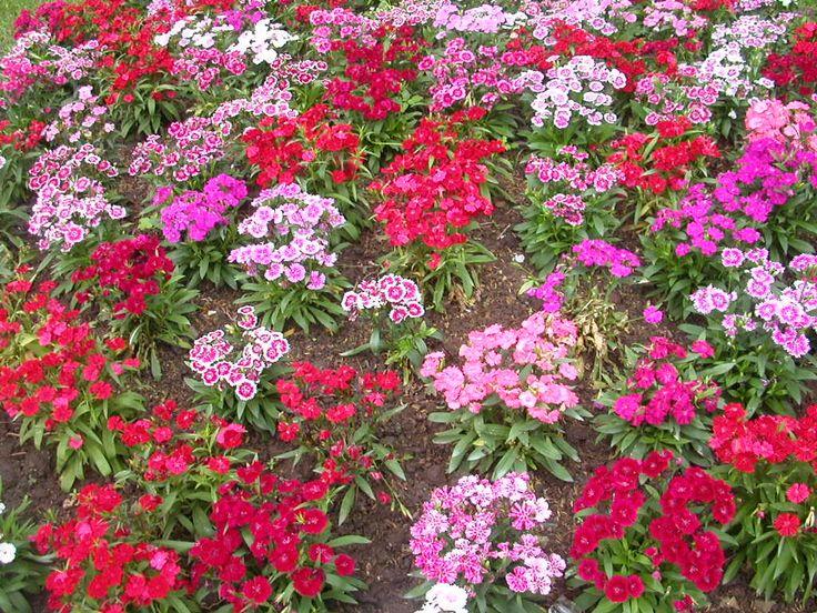 The Flowering Garden is an online garden of flowers plants and