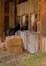 Billedresultat for old horse stable and  barn