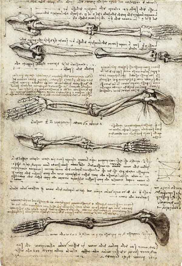 Arms by Leonardo da Vinci