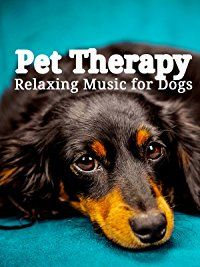 Amazon.com: Pet Therapy: Relaxing Music for Dogs: Puppies and their Human Pets Dogs: Amazon   Digital Services LLC