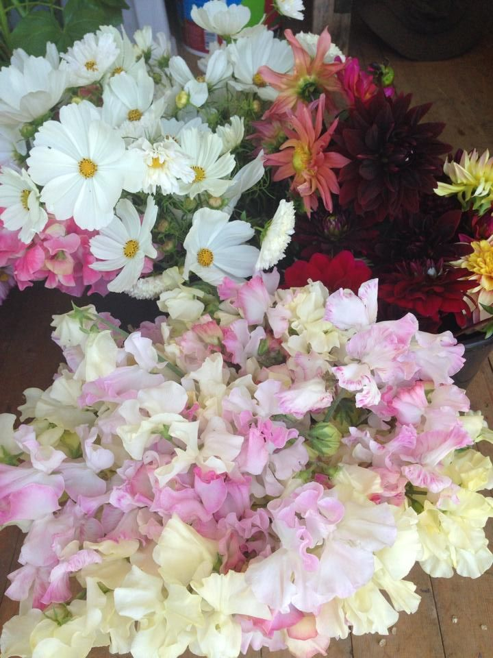 1000 images about june wedding flower ideas on pinterest. Black Bedroom Furniture Sets. Home Design Ideas
