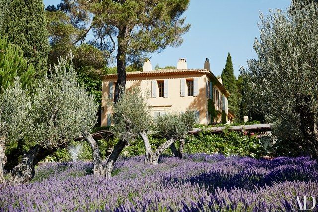 Lavender carpets the olive orchard at Domaine Chantecler, Frédéric Fekkai and Shirin von Wulffen's estate in the South of France. Working with architect Jean Paul Bernard, decorator Jean-Louis Raynaud, and landscape designer Marco Battaggia, the couple renovated the 17th-century property as their family retreat.
