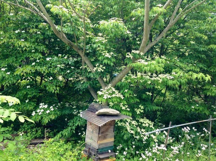ミツバチの巣 ミツバチの巣 More Flowers Scenery  ミツバチの巣