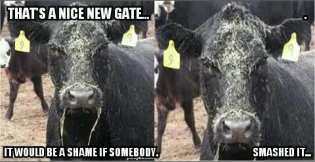 Ha we have a cows like this ;)